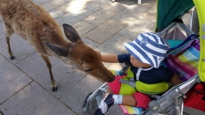 Mr E at Nara Deer Park